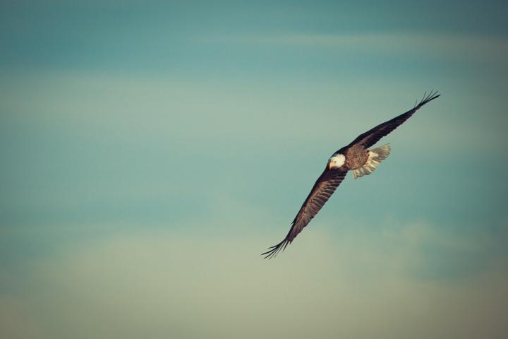 eagle-1029908_960_720