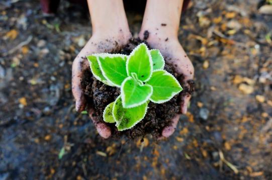 Green-Seedling-Ecology-Plant-Soil-Plant-In-Hand-1558599.jpg