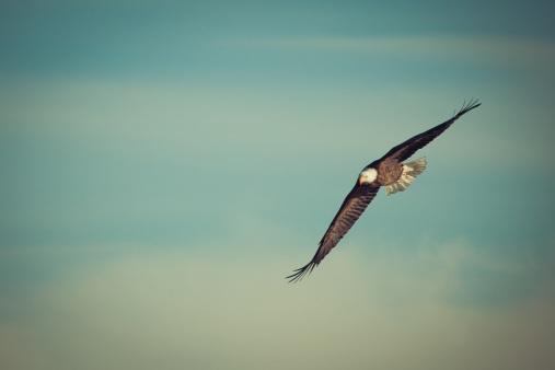 eagle-1029908.jpg
